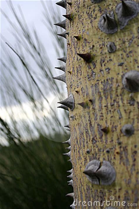 Albero Con Le Spine albero con le spine fotografie stock libere da diritti