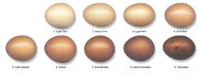 egg color chart marans egg color chart