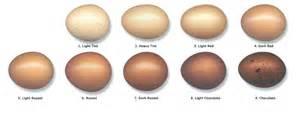 speckled sussex egg color marans egg color chart