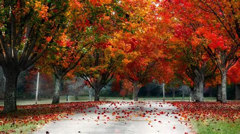 wallpaper 4k autumn fall colors wallpaper wallpapersafari