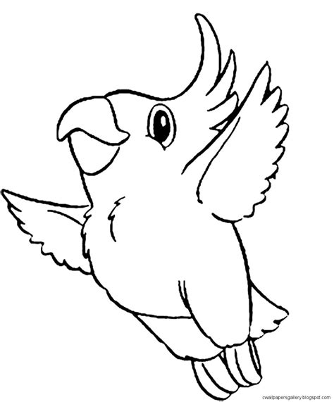 coloring pages of animals and birds bird drawing wallpapers gallery