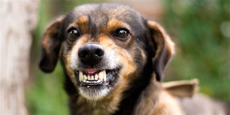 wann sind hunde stubenrein hunde m 246 euch nicht wenn ihr diese bedingung erf 252 llt