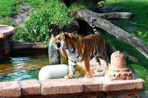 imagenes de animales orando refurbing disneyland resort paris page 4 wdwmagic