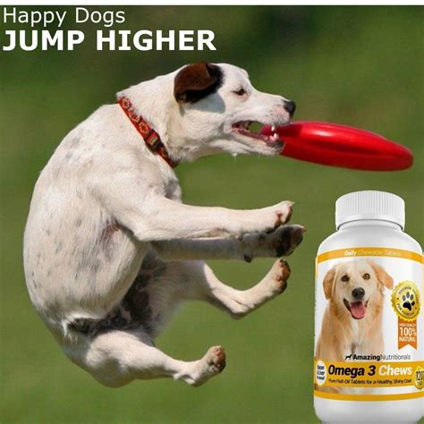 all pet dogs amazing combo omega 3 fish and turmeric curcumin for dogs