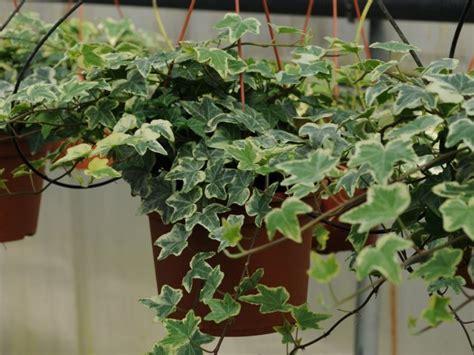 come arredare terrazzo con piante come arredare un terrazzo con fiori e piante uno spazio