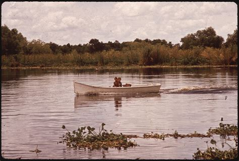 Louisiana Archives Records File Fishing In Bayou Gauche In The Louisiana Wetlands Nara 544195 Jpg