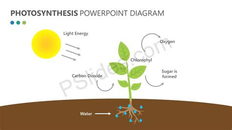 pictures of diagrams photosynthesis powerpoint diagram pslides