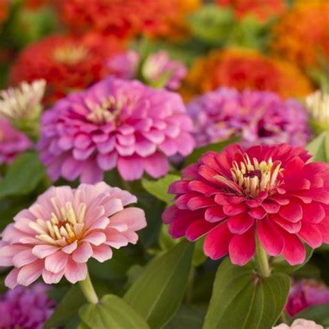summer flowers beautiful flowers  bloom