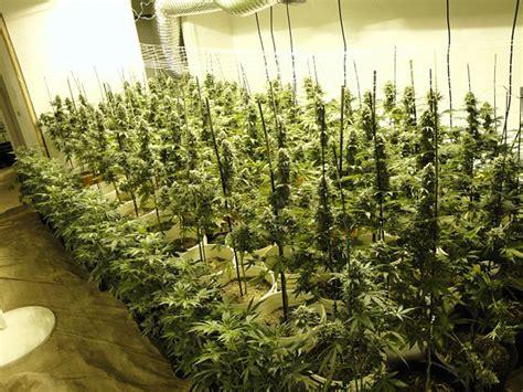 charges pending  west linn man  marijuana growing
