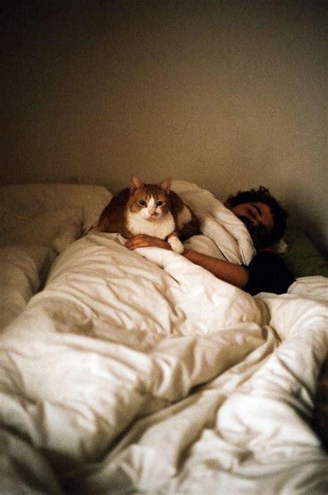 beste schlafdecke 39 best homens e gatos ou homens gatos images on