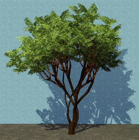 list of trees smallcinnamon