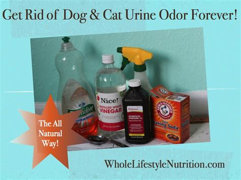 how to get rid of dog urine smell in house get rid of dog and cat urine odors the all natural way whole lifestyle nutrition