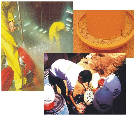 Indukan Gas Medion Igm budidaya dan perternakan cara memelihara ayam kung