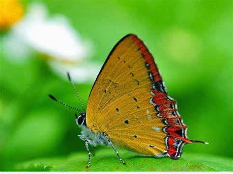 full hd nature images p desktop  macro photo