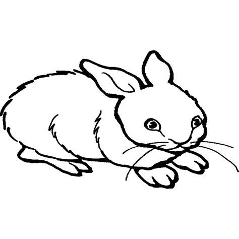 imagenes de animales omnivoros para imprimir lujo dibujos de animales omnivoros para colorear e imprimir