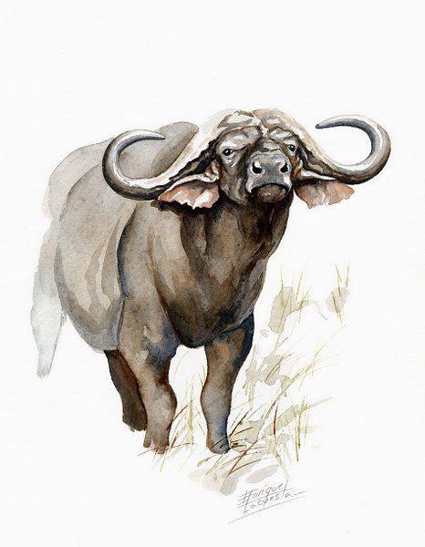 watercolor tattoos buffalo ny buffalo watercolor no 03 cape buffalo watercolor