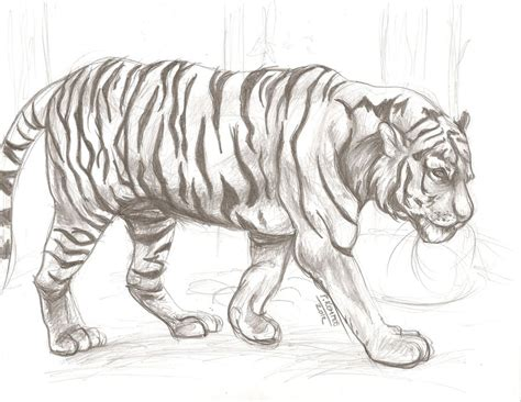 Drawings Of Animals by Animal Drawing 1 By Shamash On Deviantart