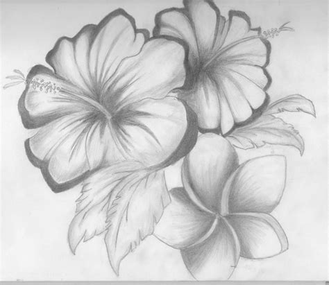 Sketches Flowers by Drawings Of Flowers Shaded Flowers By Something Easy101