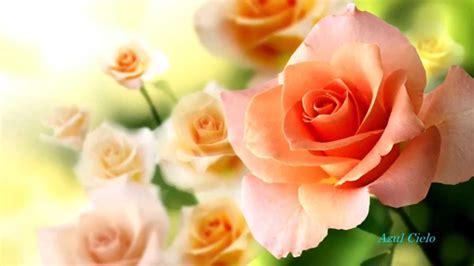 imagenes sorprendentes de flores m 250 sica relax im 225 genes de flores youtube