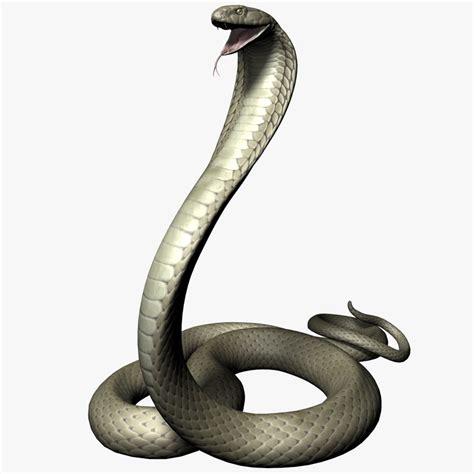 kaos 3d king cobra king cobra 3d max