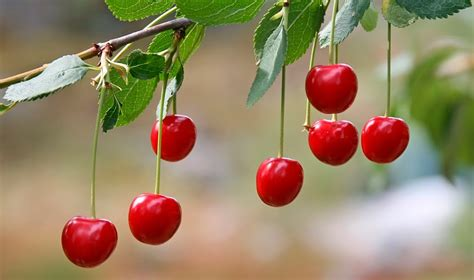 what is the fastest growing fruit tree 10 fruits and vegetables that grow fast