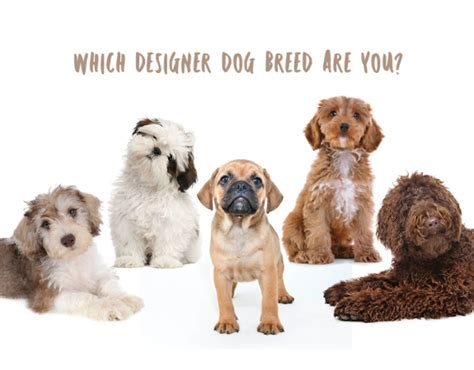 designer breeds quiz which designer breed are you thrifty momma ramblings