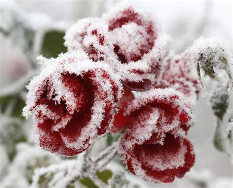 imagenes bonitas invierno cosas heladas bonitas otra forma de mirar el invierno