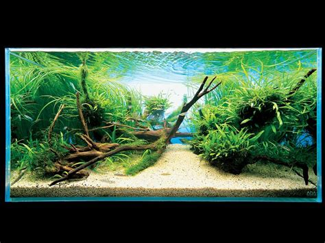 aquascape design australia any aquarists here takashi amano questions