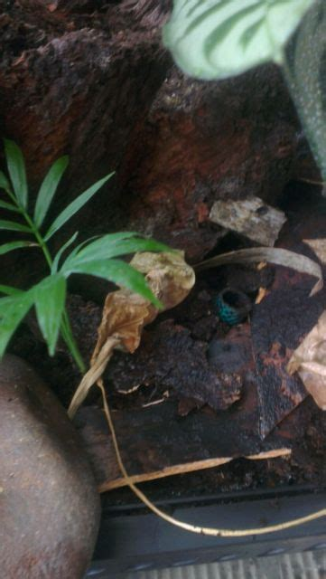 se england custom rainforest waterfall exo terra vivarium