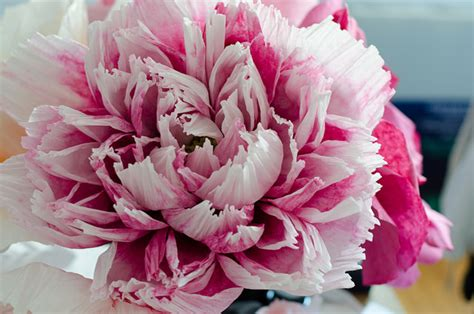 Make Your Own Paper Flowers - how to make paper flowers easy tips rubbish