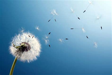imagenes que inspiran libertad leer para alcanzar la libertad gt poemas del alma