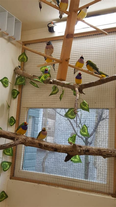 aviary lighting for finches part 2 gouldian finch housing planet aviary
