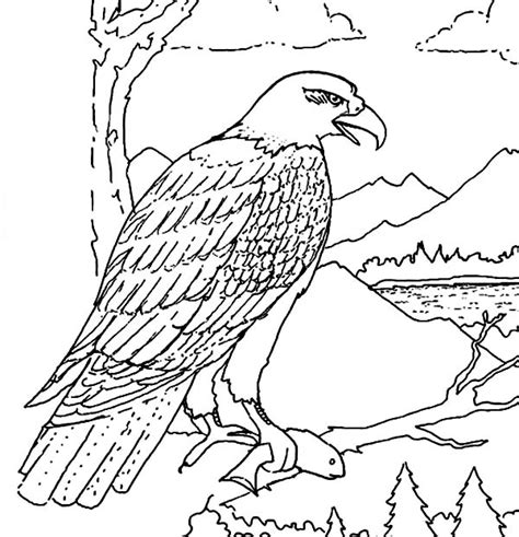 bald eagle coloring page bald eagle coloring pages printable printable coloring page