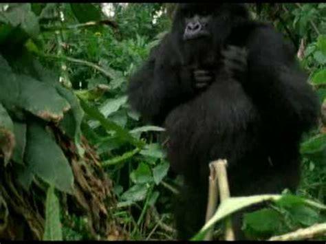 il gorilla testo fabrizio de andr 232 il bombarolo doovi