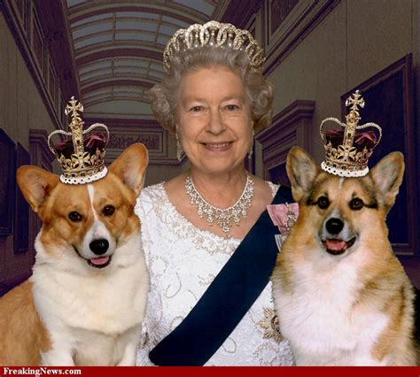 queen elizabeth s dogs qe 11 183 a white carousel