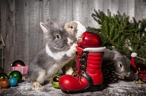 images of christmas rabbits images rabbits new year apples balls animals holidays