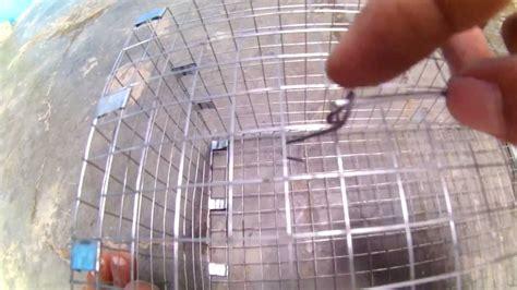 membuat jebakan tikus dari kawat cara membuat perangkap tikus part 1 terbuat dari jaring