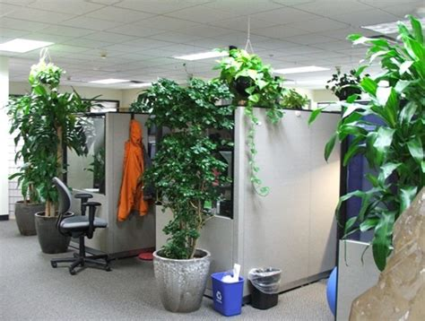 creative  fresh office plant decoration ideas