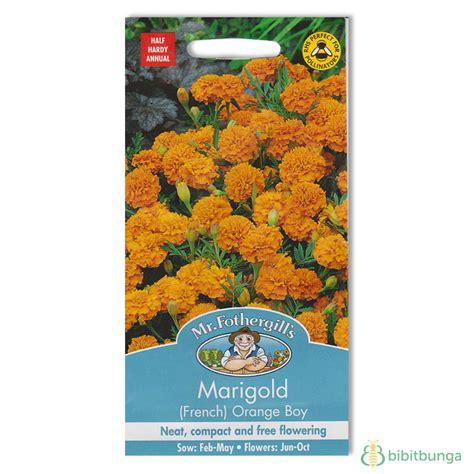 Tanaman Marigold Orange benih marigold orange boy 60 biji mr fothergills