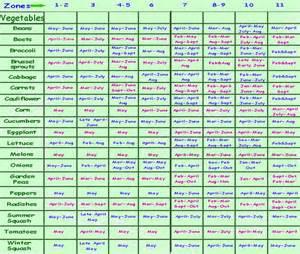 planting times for garden vegetables planting schedule schedule for planting a vegetable
