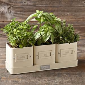 windowsill herb garden planter