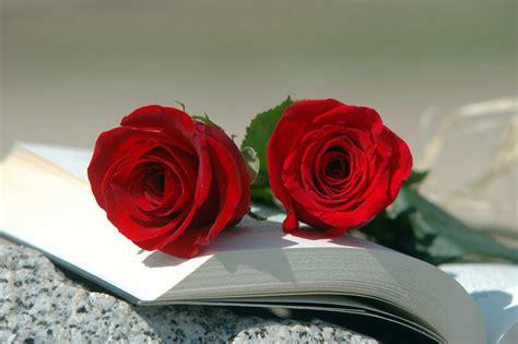 imagenes de rosas sobre libros se acerca la diada sant jordi a barcelona el d 237 a m 225 s