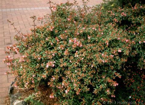 lights for small bushes flowering evergreen shrubs sun pixshark com
