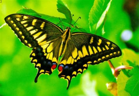 butterfly pictures images