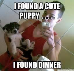 cute puppies meme memes