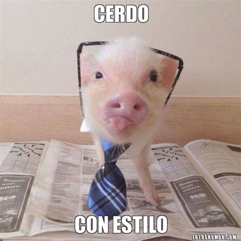 imagenes graciosas de cerdos para navidad fotos graciosas de cerdos im 225 genes divertidas y graciosas