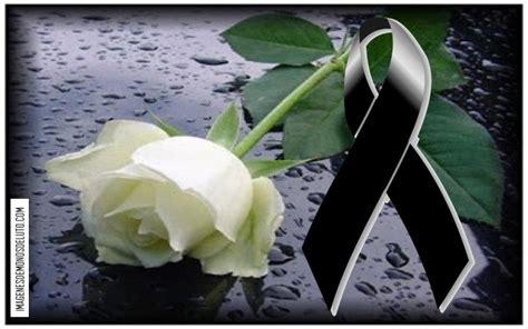 imagenes de rosas luto de juarez mo 241 os de luto con una rosa blanca imagenes de mo 209 os de