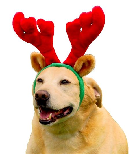 are antlers safe for puppies big clothes for large dogs bigdog boutique