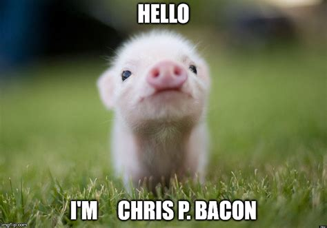 Funny Pig Memes - 32 very funny pigs meme photos and pictures