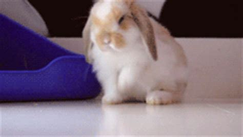 bunny bathroom gif bunny bath a beautiful mind burdened with chaos